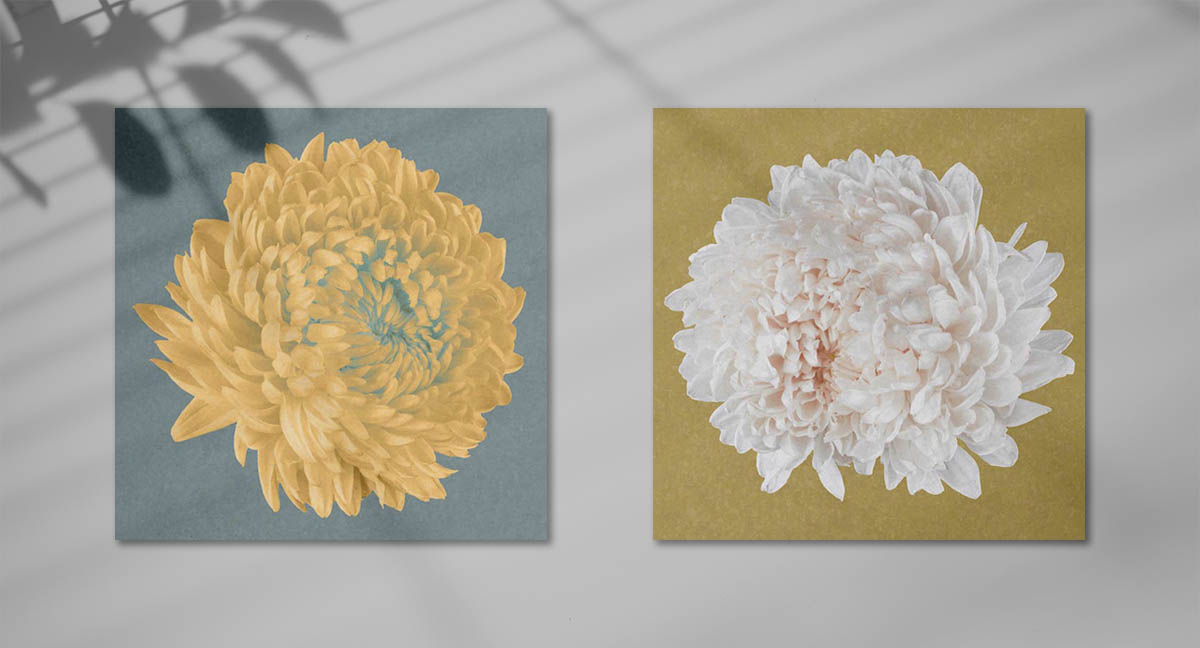 Floral art prints in yellow and turquoise by Hong Kong photographer Alvin Mak.